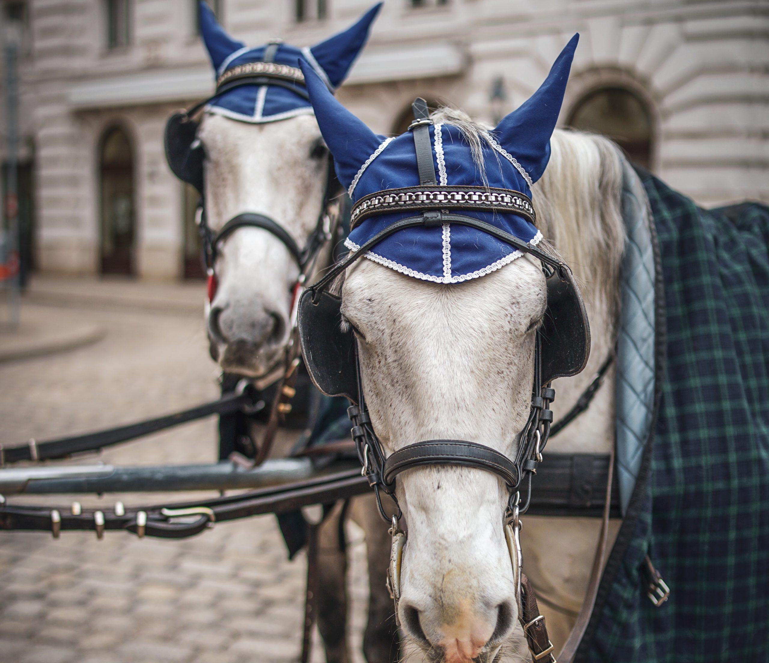 lovak Bécsben